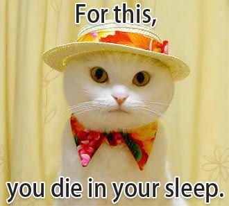 lolcat die sleep