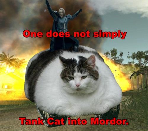 Mordor Tank Cat