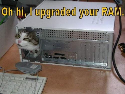 Lolcat upgraded ram