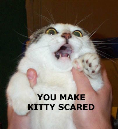 Lolcat scared