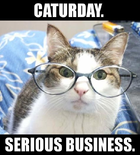 Caturday Serious Business
