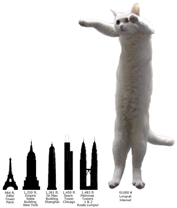 Long Cat Text