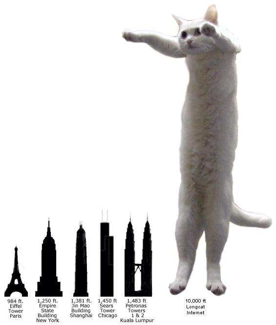 longcat4 caturday 5! xsp
