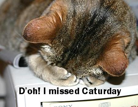 Caturday 7