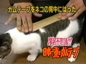 Taped Cat