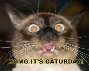 Caturday 12
