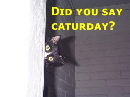 Caturday 9